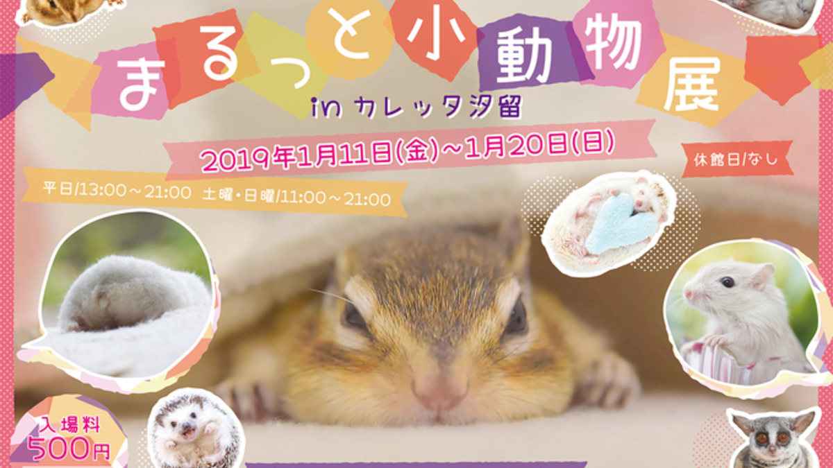 まるっと小動物展 in カレッタ汐留