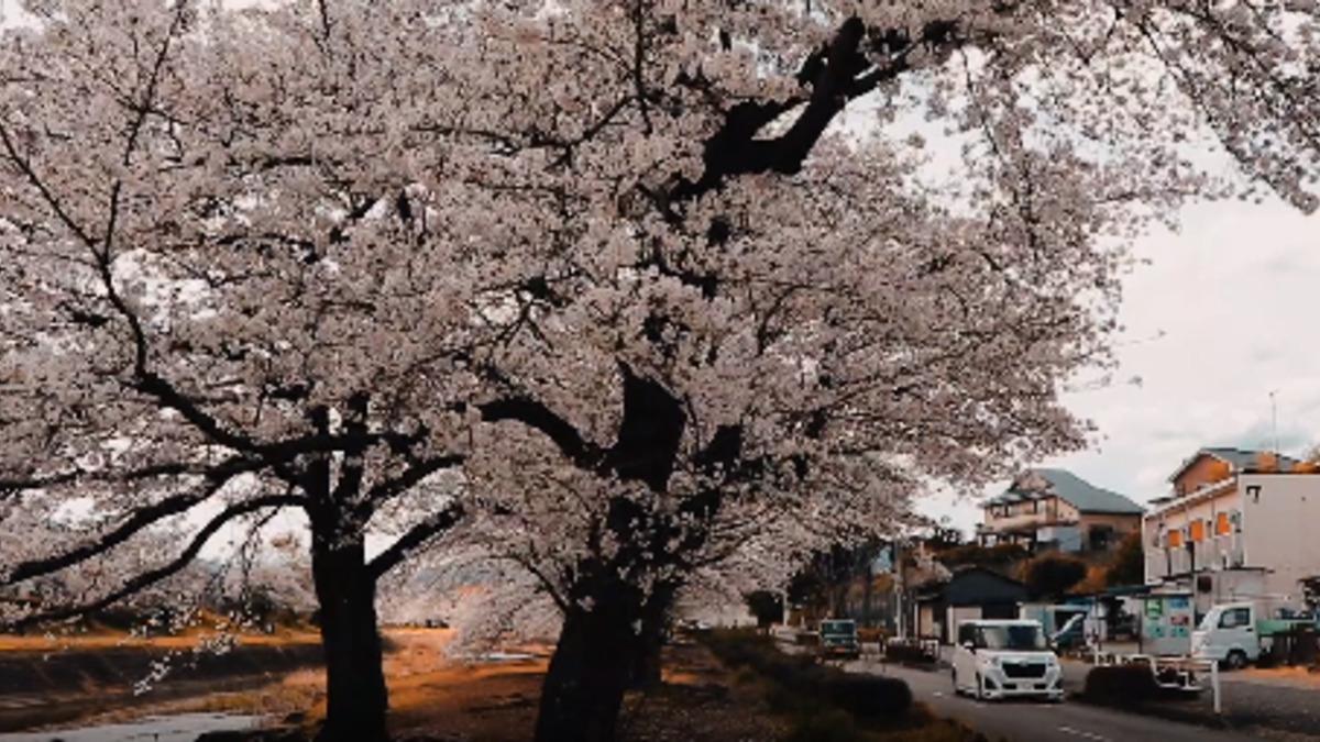 市庁舎前浅川河川敷広場